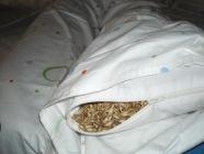 riempimento cuscino farro spelta