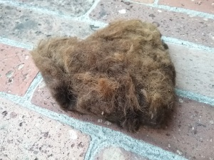 lana grezza con lanolina